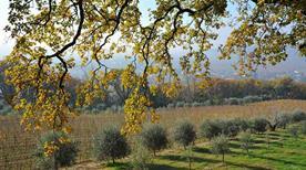 Redoro Srl - Frantoi Veneti - >Mezzane di Sotto