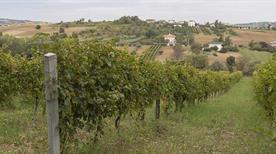 Fattoria Poggio San Martino - >San Giovanni in Marignano