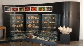 Museo sardo di geologia e paleontologia Domenico lovisato - >Cagliari