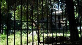 Antiquarium - >Rome