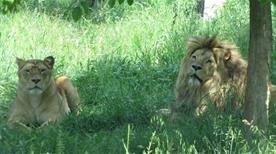 Parco Valcorba - Giardino Zoologico - >Pozzonovo