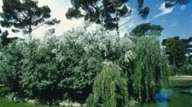 Parco Naturale di Cervia - >Cervia