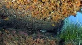 Punta Parrino - >Lampedusa