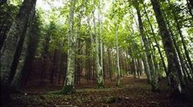 Arboreto di Vallombrosa - >Reggello