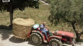 Agriturismo Angelucci Azienda Agrituristica di Nicola Angelucci  - >Lanciano