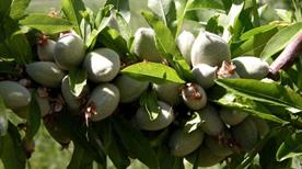 Agriturismo le Magnolie - >Loreto Aprutino