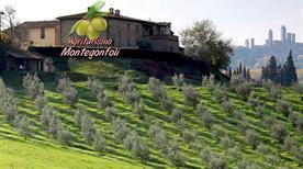 Agriturismo Montegonfoli S.R.L. - >San Gimignano