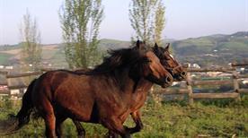 Agriturismo Monticino - >Castrocaro Terme e Terra del Sole