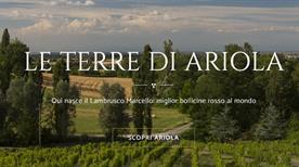 Ariola S.r.l - >Langhirano