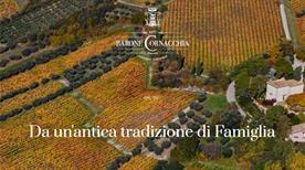 Azienda Agricola Barone Cornacchia - >Torano Nuovo