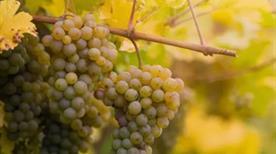 Azienda Agricola Molinari - Vini Dell' Oltrepo Di Molinari Filippo - >Borgo Priolo