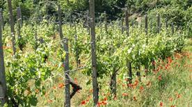 Azienda agricola Picchioni Andrea - >Canneto Pavese