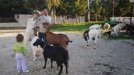 Azienda Agriturismo Carpe Diem di Mancone Mauro - >Venosa