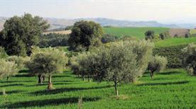 Azienda Olearia Basile Snc di Basile G. C. - >Andria