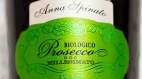 Azienda Vinicola Anna Spinato S.A.S - >Ponte di Piave