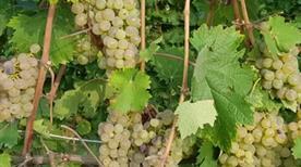Azienda Vinicola Viglione Antonio & Figli S.r.l. - >Monteu Roero