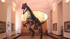 Museo Zoologico - >Padova