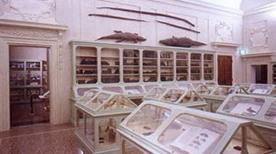 Museo Aldovrandi - >Bologna