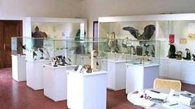 Museo di Scienze Naturali - >Cesena