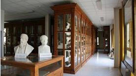 Museo di Anatomia Comparata - >Rome
