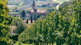 Borin Vini E Vigne S.S.A. Di Gianni Dott.Borin E C. - >Monselice