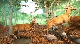 Museo Naturalistico del Parco dell'Orecchiella - >San Romano in Garfagnana