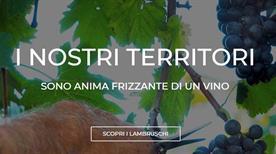 Cantina Di S. Croce Societa' Agricola Cooperativa - >Carpi