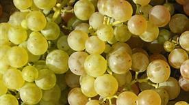 Cantina Sociale Di Monteforte D'Alpone Soc. Cooperativa Agricola - >Monteforte d'Alpone