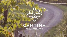 Cantina Sociale Forli' Predappio  Società Agricola Cooperativa - >Forli'