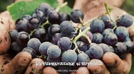 Cantine Lebovitz Di Lebovitz Gianni & Zamboni Paolo Snc - >Roncoferraro