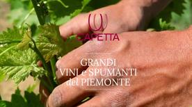 Capetta I.Vi.P. S.P.A. Industria Vinicola Piemontese - >Cuneo