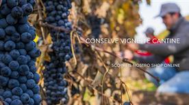 Conselve Vigneti E Cantine - >Conselve