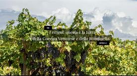 Consorzio Tutela Vino Bardolino - >Bardolino
