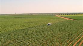 Cooperativa Produttori Agricoli (S.R.L.) - >San Pancrazio Salentino