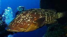 Diving in Elba - >Procchio