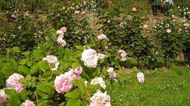 Giardino delle rose  - >Firenze