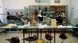 Museo di Scienze Naturali - >Rosignano Marittimo