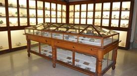 Museo Civico di Storia Naturale del Liceo Classico N. Machiavelli - >Lucca