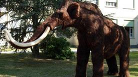 Museo Civico di Storia Naturale - >Jesolo