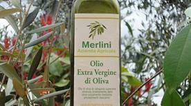 Olio di Toscana Merlini - >Certaldo