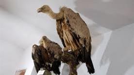 Museo di Scienze Naturali - >Belvì