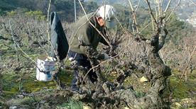 Foresti  - >Camporosso