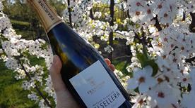 Francone Sas - Cantina, Winery - >Neive