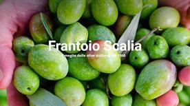 Frantoio Scalia Carmelo Carmelo Scalia Oleificio - >Mascalucia