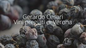 Gerardo Cesari S.P.A. - >San Pietro in Cariano