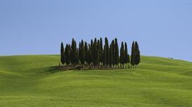 Mocine Az.Agrituristica Venatoria - >Asciano
