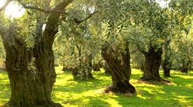 Olearia Dolita Srl - >Giugliano in Campania