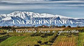 Tenuta Ulisse - >Crecchio
